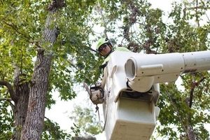 Picture of our crew member in a bucket truck to trim a tree in Roanoke, VA