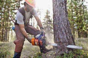 tree service work Roanoke, VA