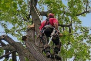 tree trimming Roanoke, VA